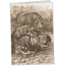 Hippopotami Family Note Card